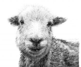 Customer Spotlight- Vivienne Coleman from Distinctive Pencil Drawings