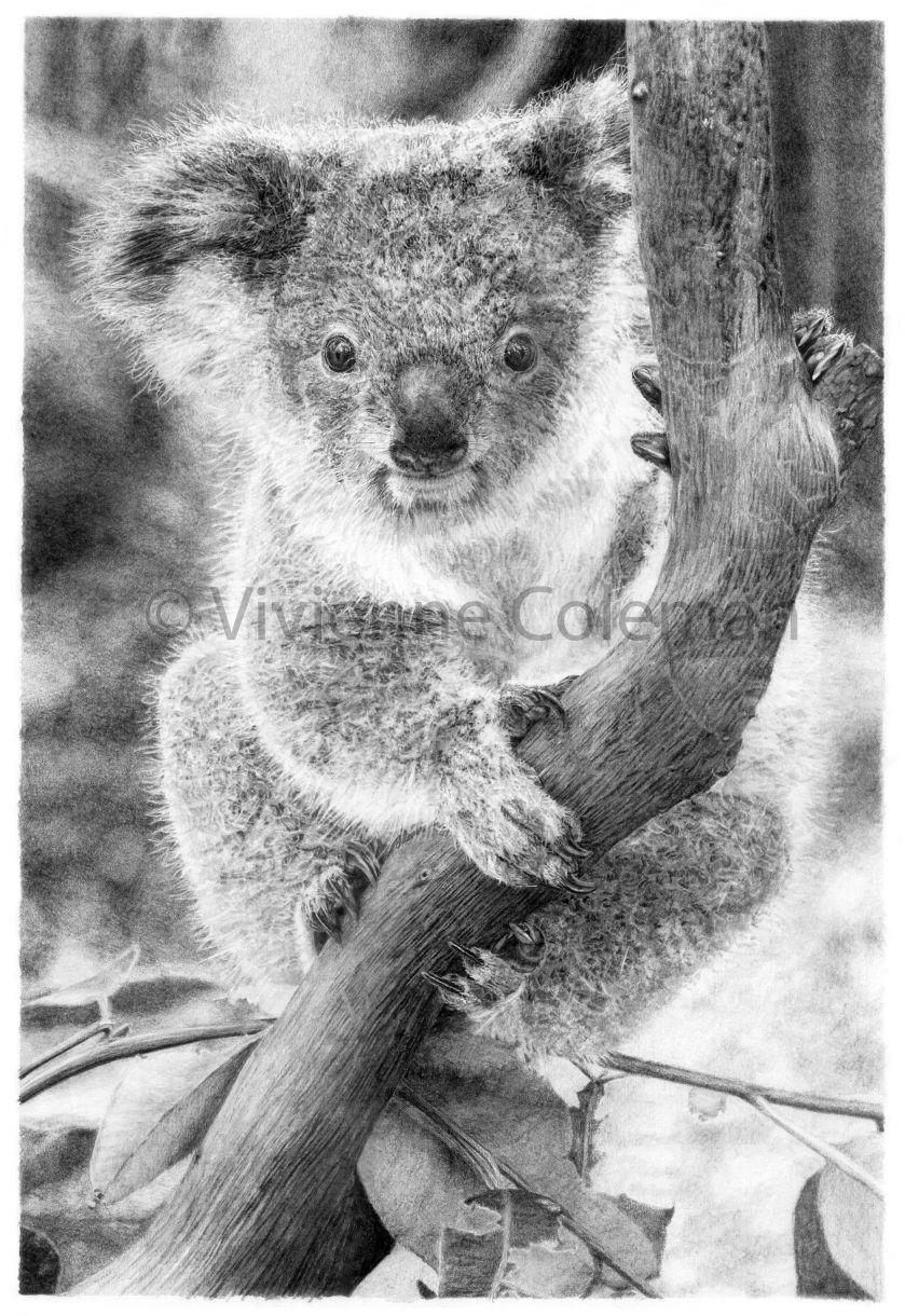 Coleman Koala Cont 250