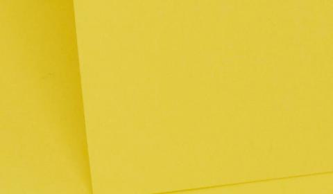 Daffodil Plain Card 290gsm