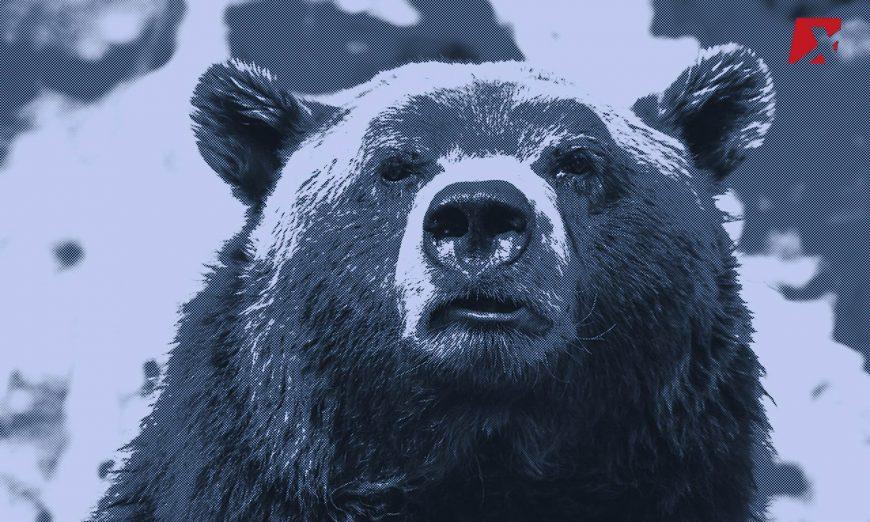 Bear BTC