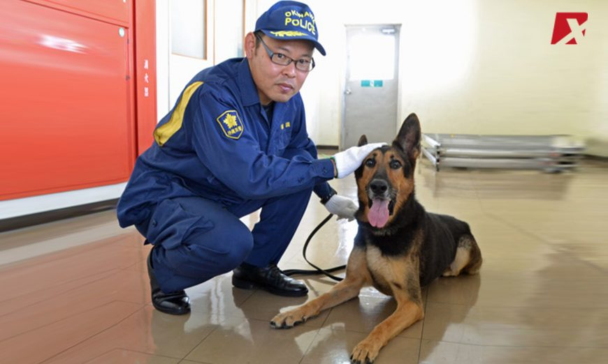 Japan-police-and-K9