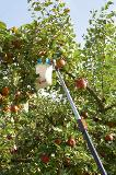 GARDENA 03110-30 combisystem-Obstpflücker-Aktion Thumbnail