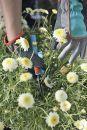 GARDENA 00202-20 Gartenhandschuh Größe 7/S Thumbnail
