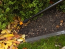 FISKARS QuikFit Rosenrechen 135501 Thumbnail