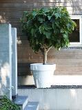ELHO Pure Round Pflanztopf Ø40xH35 cm - weiß - 268477 Thumbnail