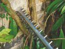 Bosch Heckenschere AHS 60-26 0600847H00 Thumbnail