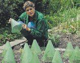 Gardissimo Pflanzenhut Sunnyboy (Stz. 10 Stk) - 534405