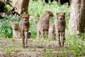 Tickets voor Burgers' Zoo voor €15