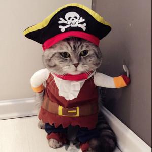 Piraten kostuum hond of kat voor €4,89