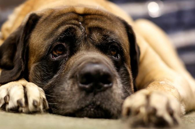Il nostro cane ci giudica in base a come trattiamo le altre persone