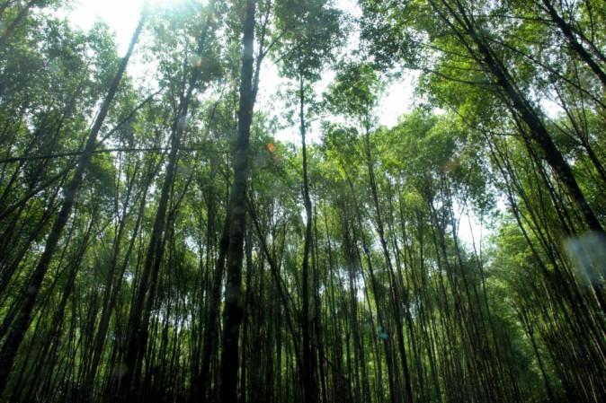 Giappone, scomparso il bambino lasciato nel bosco per punizione