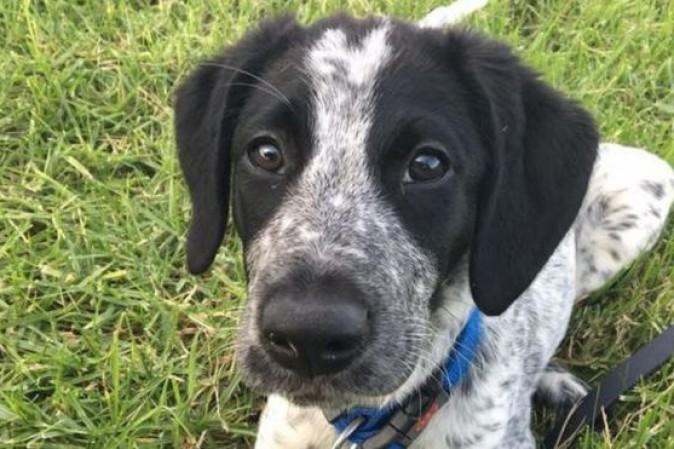 Nuova Zelanda: polemiche per l'uccisione di un cane antibomba in fuga all'aeroporto