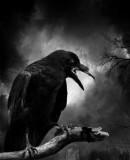 Benutzerbild von 5. Oberbefehlshaber Raven