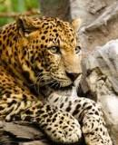 Benutzerbild von 5. Oberbefehlshaber Jaguar1