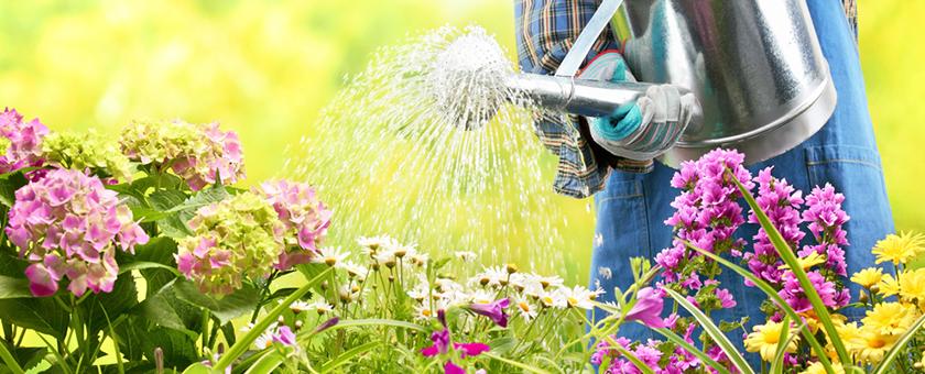 Economie d'eau Jardin