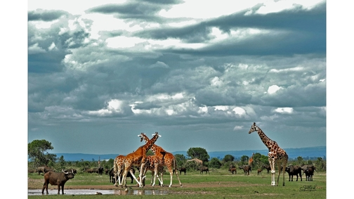 Clouds over the waterhole2