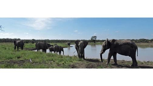 Elephant Dam2