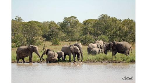 Herd at Elephant Dam