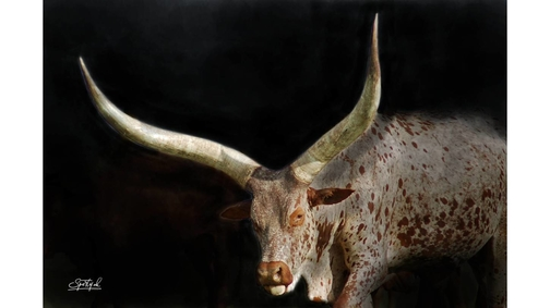 Morani Cow