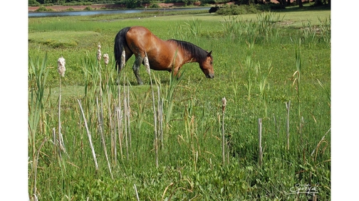 Pony at Hatchetts Pond