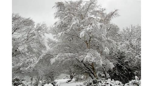 Snow at Hatchetts Pond1