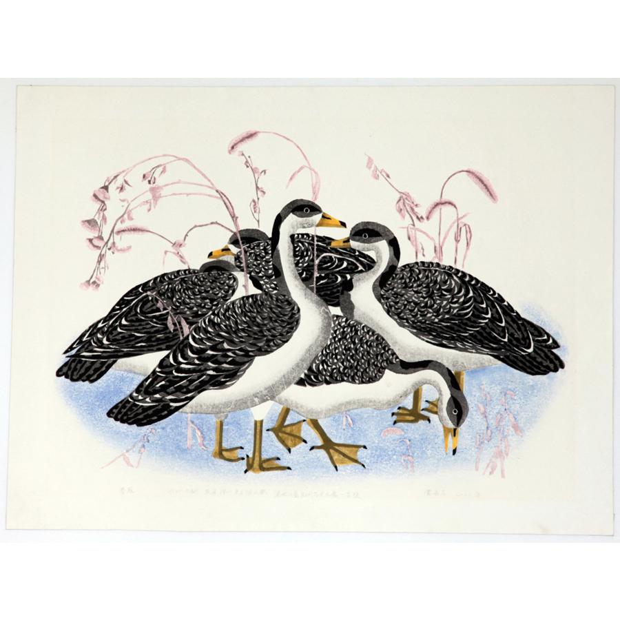 Spring Wild Gooses