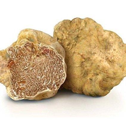 White Truffle Bianchetto (Tuber Borchii)