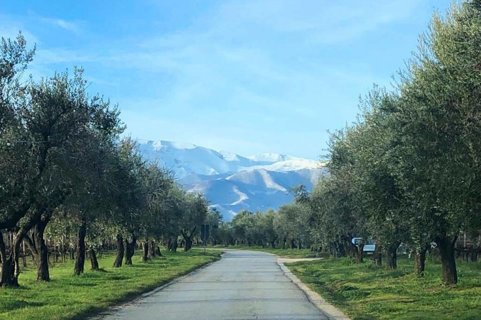 Vineyard in Abruzzo