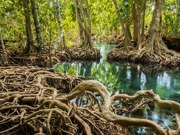 10 facts about Mangroves