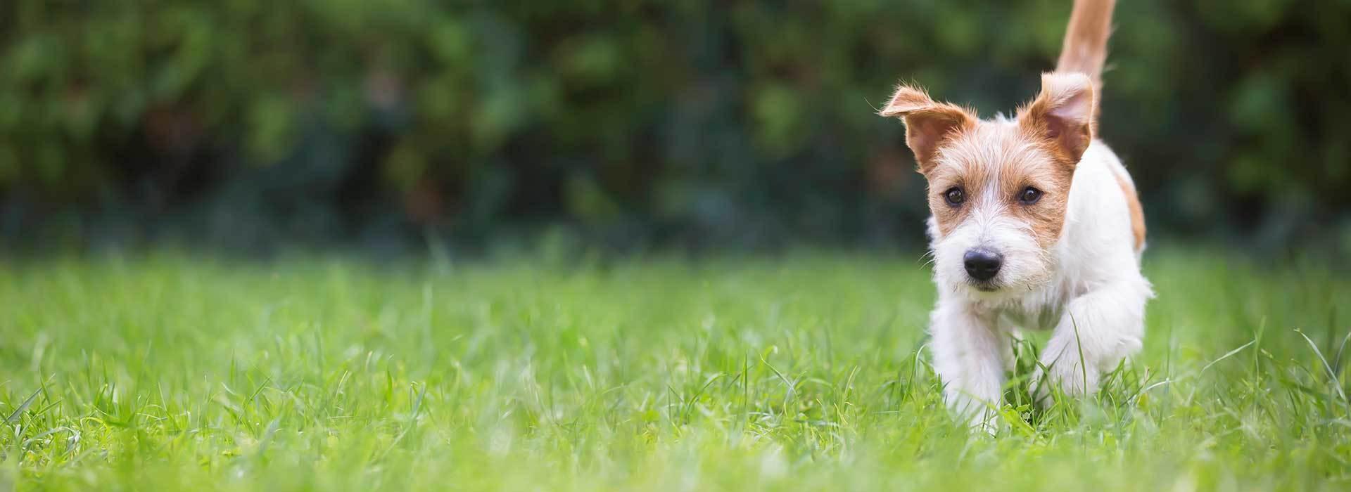 Dog Walking Caterham