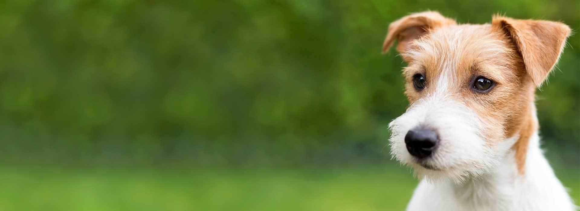 Dog Training Caterham