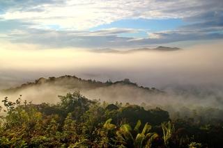 Borneo roots
