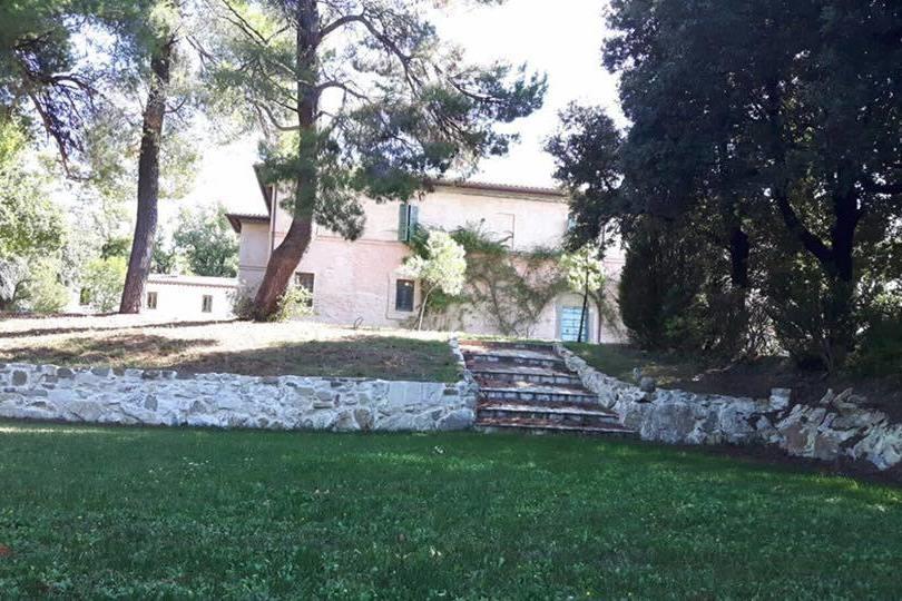 Vineyard in Umbria