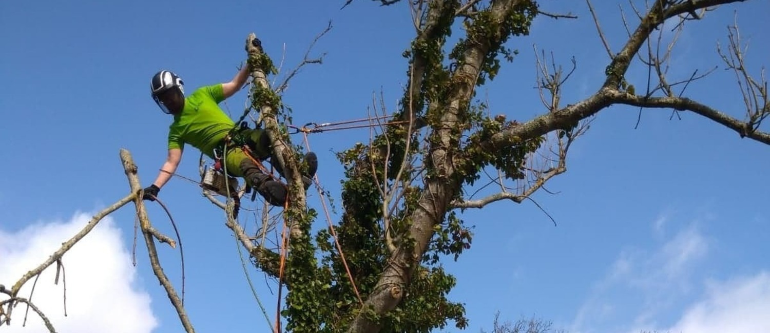 Tree Surgery Isle of Wight