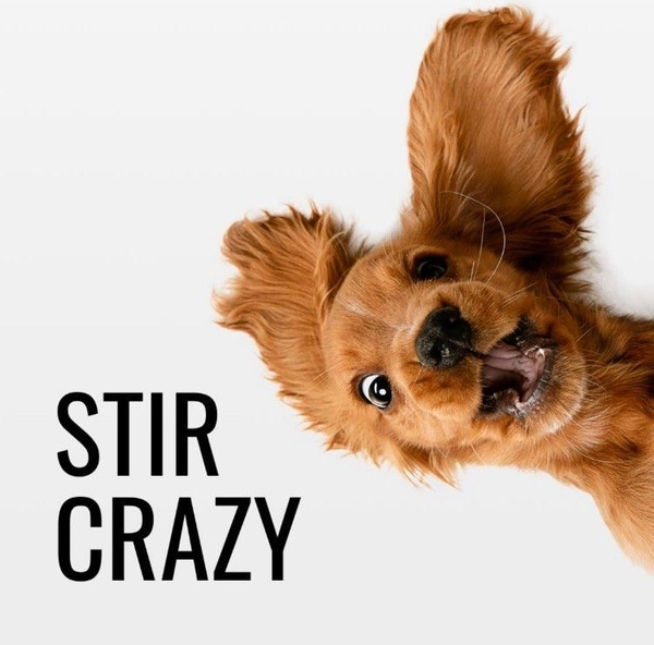 Stir Crazy!  Self Isolation Tales
