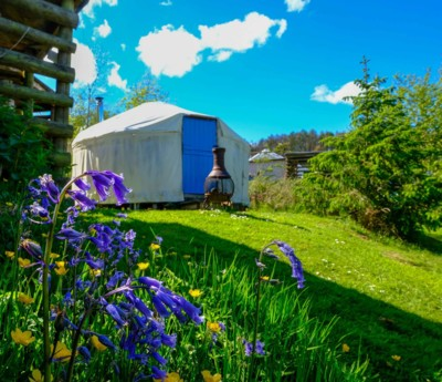 Glamping Yurt with forest bluebells in foreground