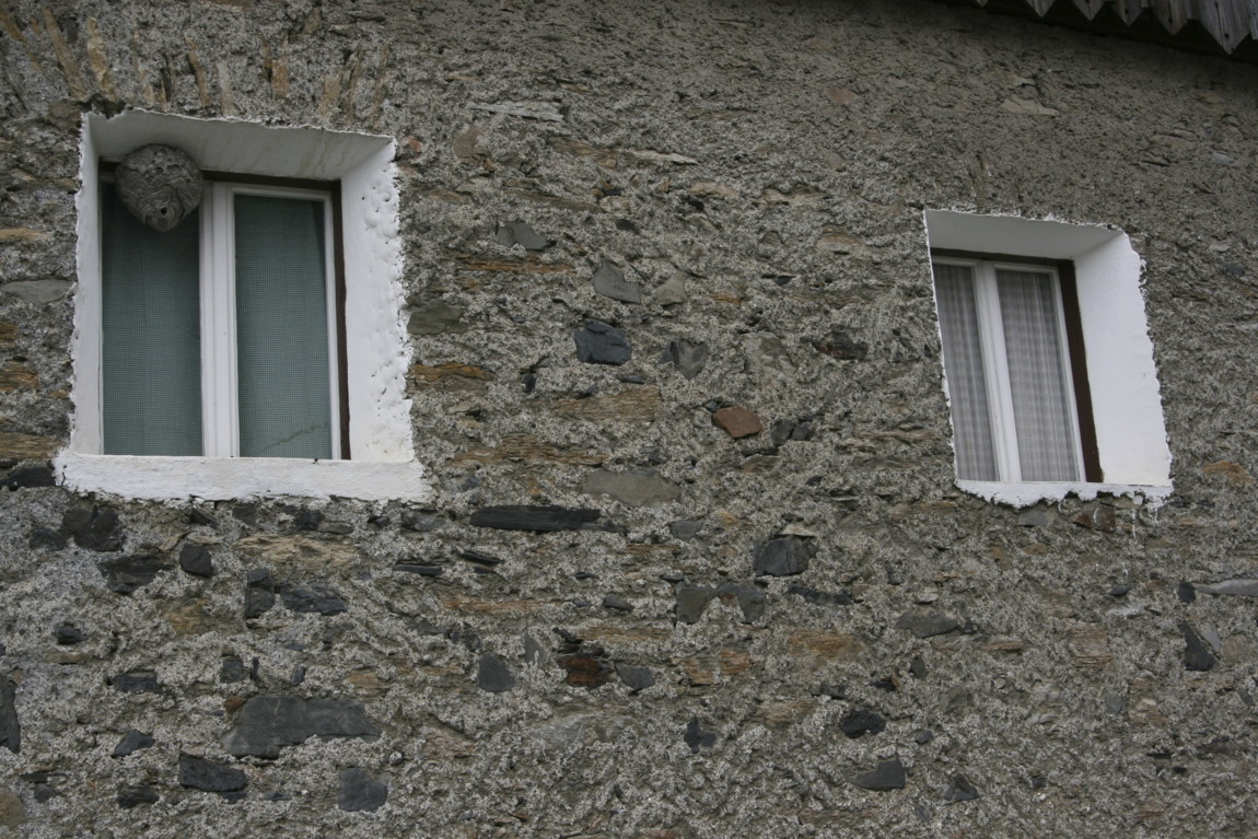 wasp-nest-loft