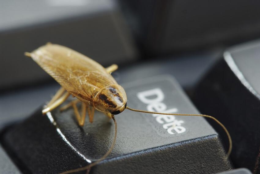 Cockroach-Enfield