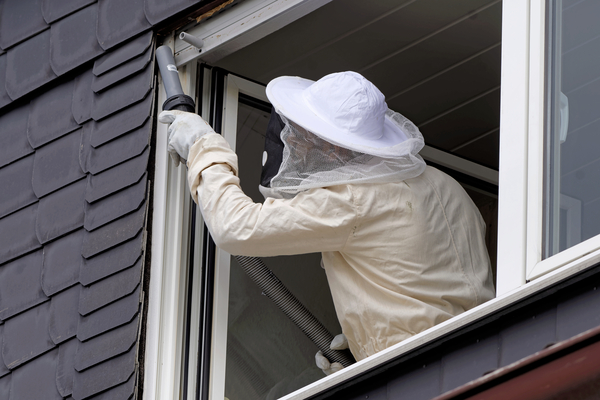 Wasps and Hornets, the Summer Season Unwanted Guests