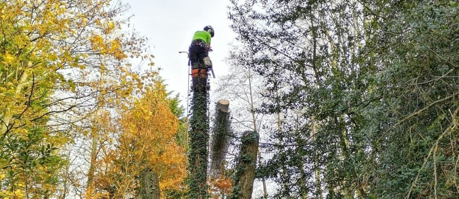 Arborist Isle of Wight