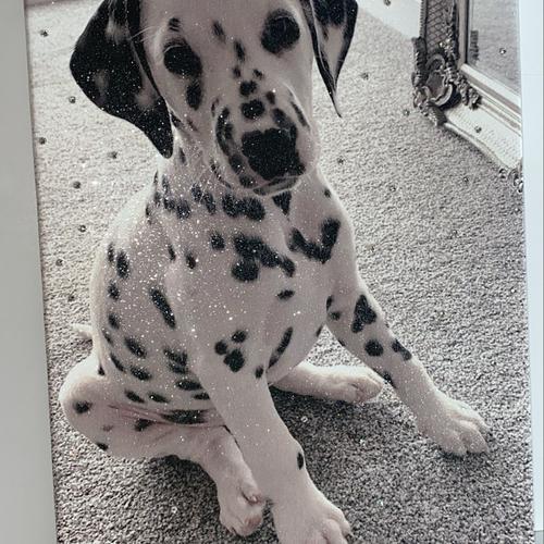 Glitter Pets Photo Canvas