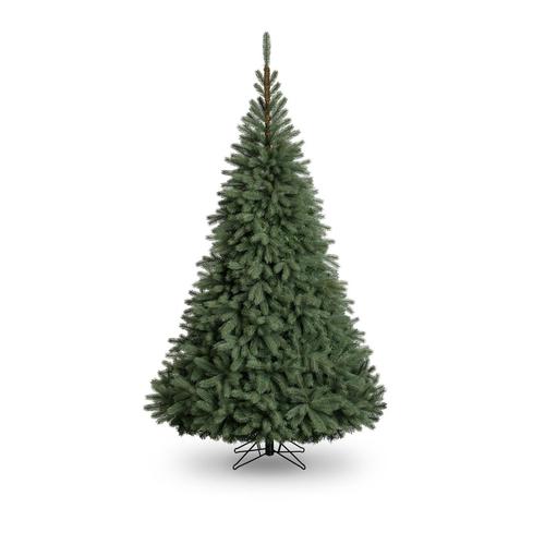 7Ft Blue Oregon Christmas Tree