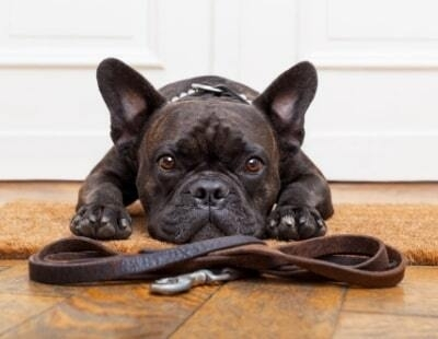 No Pets: charities back call for reform of rental regulations