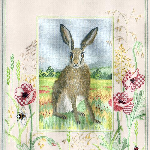 Wildlife - Hare