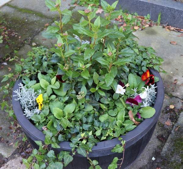 Manningtree Town Council Newly Replanted Flower Tubs