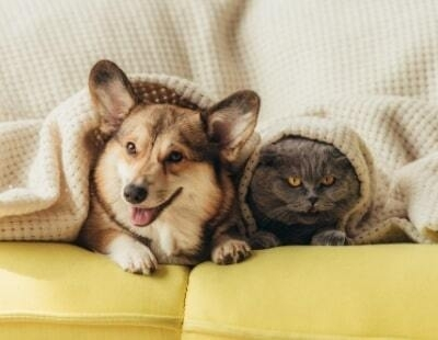 Pets in Rental Properties: Date set for MPs to debate issue