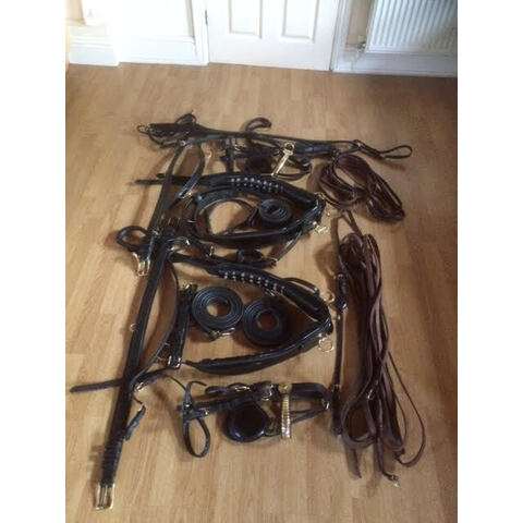 English Tandem Show Harness (20210110)