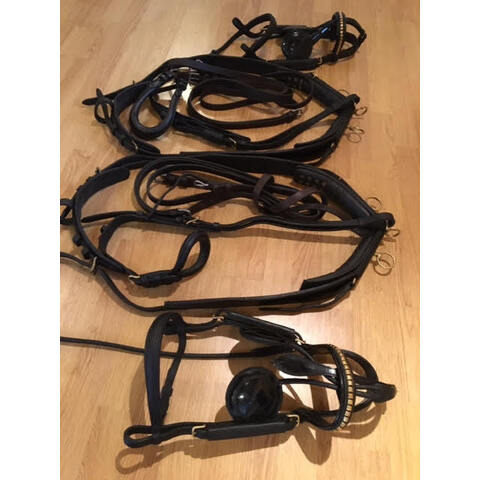 Set of English Pony Pairs Harness (20210111)