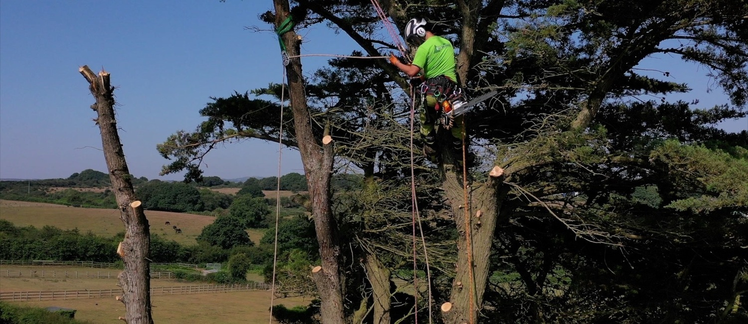 Tree Surgeon Isle of Wight