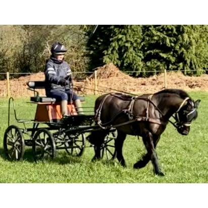 Bennington Mini Deluxe Carriage (20210222) - New Advert February 2021